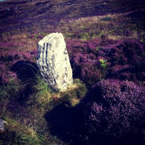 a photo of a standing stone on a hillside covered with purple and green heather